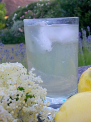 Elderflower Cordial English country Garden 12