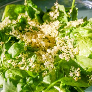 As well as in a cordial elderflowers are delicious in a salad too!