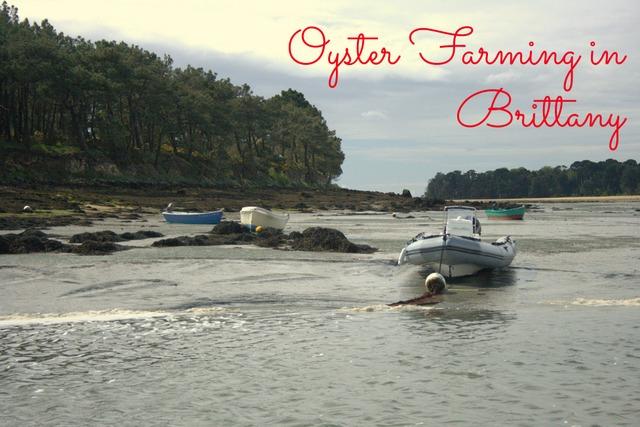 Golfe Du Morbihan - Oyster Farming