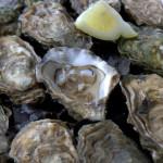 Oyster Farming in the Golfe Du Morbihan, Brittany