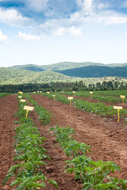 Cirio Development Fields
