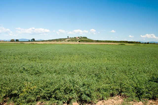 Cirio True Italian Tuscany Fields of Chickpeas Helen Best-Shaw-1