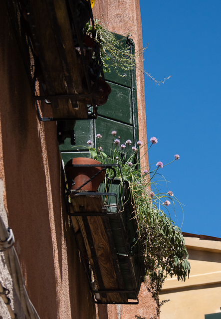 Window boxes of fresh herbs - thyme, chives and sage Castello Quarter of Venice