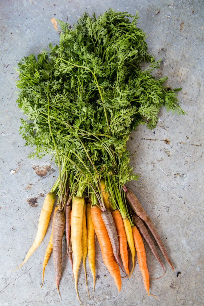 A bunch of heirloom carrots with their tops