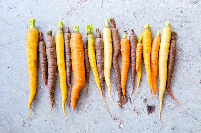 A row of heirloom carrots on a grey worktop viewed from above