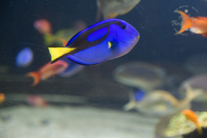 Fish at Nausicaa National Sealife Centre