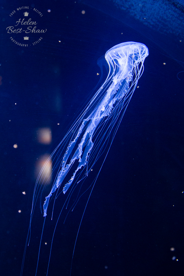 Jellyfish at Nausicaa France's National Sealife Centre