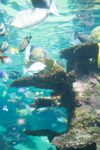 Tropical fish at Nausicaa