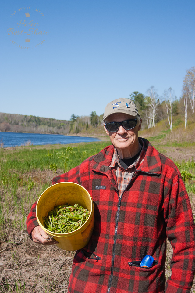 Foraging for fiddlehead ferns on the banks of the Miramichi river in New Brunswick, Canada