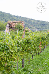 The story behind Prosecco Superiore CV DOCG - landscape