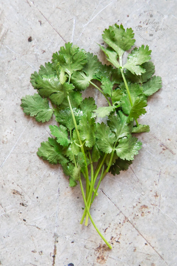 An overhead shot of a bunch of coriander or cilantro on a distressed grey background