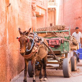 Traditional transport of a donkey cart in Marrakech