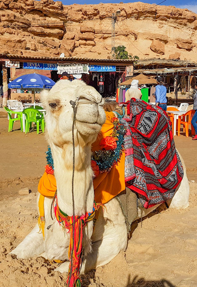 Tunisia is a nation brimming with culture and history, sadly currently suffering from turbulent times. One for the intrepid traveller or for your bucket list