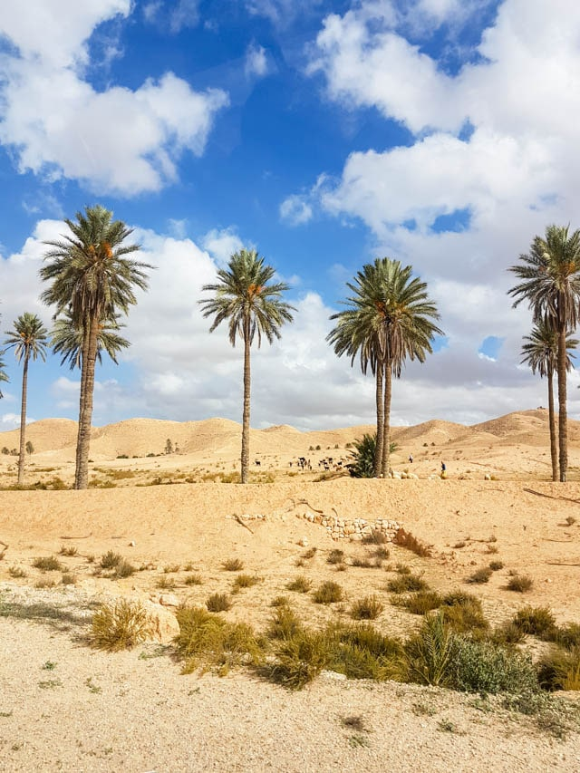 Palm Trees in the Tunisian desert