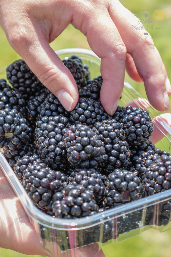 A clear plastic punnet of Driscolls Sweet Victoria blackberries, a hand is picking up one of the berries