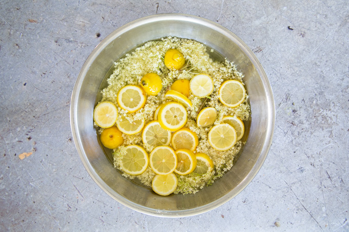 Elderflowers, sugar syrup with vitamin C, and sliced lemons steep in a bowl.